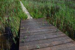 Wooden plank bridge leads to tiled passage across marshy land near healing muds and beaches of Nin, croatia, adriatic. Shot during summer season Royalty Free Stock Photos