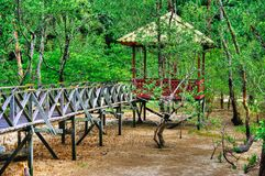 Wooden plank bridge observatory of mangrove forest in rain forest of Borneo Malaysia.  royalty free stock photography