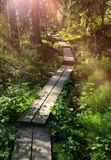 Wooden causeway in green forest. Wooden plank causeway in lush green Scandinavian forest stock photos
