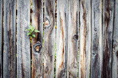 Wooden plank fence background Stock Photos