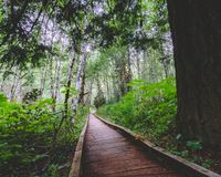 Wooden plank path leading to infinity through saturated green forest. royalty free stock image