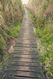 Wooden Plank Path Royalty Free Stock Photos