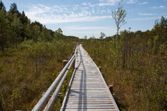 Wooden plank path Royalty Free Stock Photography