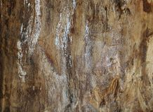 Wooden plank texture as a background royalty free stock photography