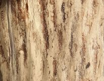Wooden plank texture as a background stock photography