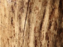 Wooden plank texture as a background royalty free stock photo