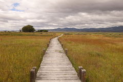 A wooden plank trail Stock Images