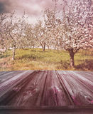 Wooden planks with apple orchard in background. Old wooden planks with apple orchard in background Stock Photo