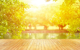 Wooden planks and beautiful lighting sunset on green park background Stock Image