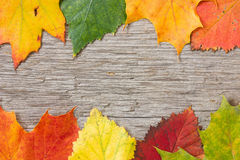 Wooden planks and colorful fall leaves Royalty Free Stock Images