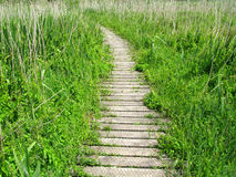 Wooden planks nature path. Stock Photos