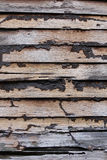 Wooden planks with termites Royalty Free Stock Photos