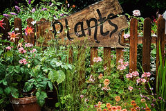 Wooden plant sign in flower garden Stock Photo