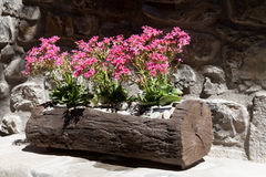 Wooden planter Stock Images