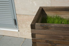 Wooden planter with grass Stock Photo