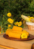 Wooden plate with boiled corn. Royalty Free Stock Image