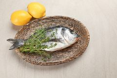 Wooden plate with fresh dorado fish. On light background Stock Image