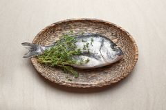 Wooden plate with fresh dorado fish. On light background Royalty Free Stock Photos