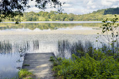 Wooden platform in the field on the lake Royalty Free Stock Image