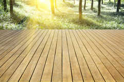 Wooden platform beside the green forest Royalty Free Stock Photography