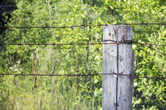 Wooden pole with barbed wire Stock Images