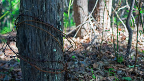 Wooden pole with barbed wire Stock Photography