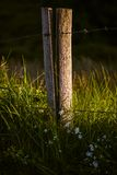 Wooden pole with barbwire Royalty Free Stock Photo