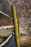 Wooden pole and barbwire. A close-up of wooden poles with barbwire on a cold winter day Stock Image