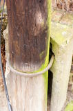 Wooden pole Stock Image