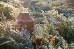 Wooden pole and cypress bushes in winter frost Stock Photos