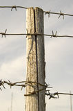 Wooden pole with a prickly wire. Royalty Free Stock Image