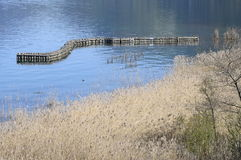 Wooden pole protection for reeds bed in France Stock Photo