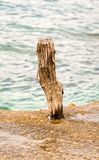 Wooden pole on the seaside. Wooden pole at a harbor dock edge Royalty Free Stock Photo