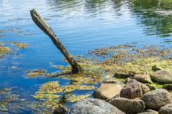 Wooden pole in water. Wooden pole in the water at the island Tjärö in Blekinge in southern Sweden Royalty Free Stock Images
