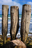 Wooden poles Royalty Free Stock Image