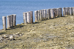 Wooden poles along the waters edge in Zeeland Stock Image