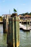 Wooden poles in Atlantic ocean. Bundle of wooden poles. stock images