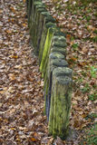 Wooden poles in autumn forest Royalty Free Stock Image