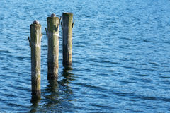 Wooden poles in the blue water Stock Images