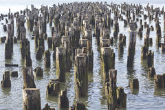 Wooden poles. Group of wooden poles under water royalty free stock photos