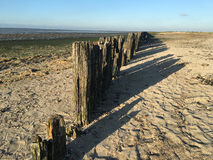 Wooden poles during low tide at the waddensea Stock Photos