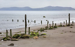 Wooden poles with mud and seaweed on the beach of Royalty Free Stock Photos