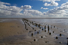 Wooden poles on a mudflat Royalty Free Stock Photos