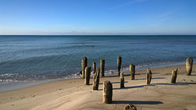 Wooden poles on the sea coast Stock Photography