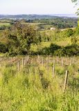 Wooden poles with stretched metal wire support the vineyard in sunny day. Vineyards agriculture in spring. Soft focus. stock image