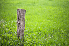 Wooden post in green field Royalty Free Stock Image