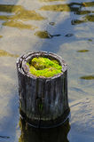 Wooden post with green moss Stock Photography