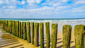 Wooden Posts of a beach erosion protection system along the beach at the town of Vlissingen in Zeeland Province. In the Netherlands stock photo