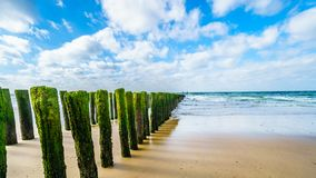 Wooden Posts of a beach erosion protection system along the beach at the town of Vlissingen in Zeeland Province. In the Netherlands royalty free stock images