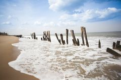 Wooden posts on the beach Royalty Free Stock Photos